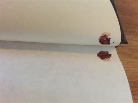 can bed bugs live in books dead bugs found squished in borrowed toronto library book