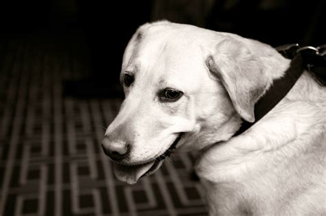 friendly hotels denver heavenly friendly hotels for you and your fur baby