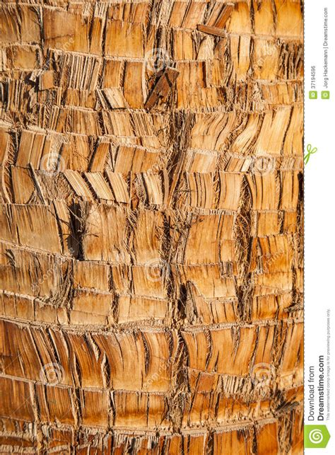 palm woodwork brown palm tree wood bark texture background