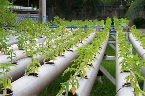 Organic Gardening Organic Hydroponic Gardening At Home Home Inspirations