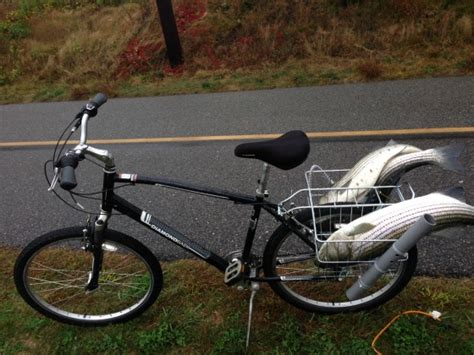 cape cod bicycle cape cod canal fishing report for october 9th