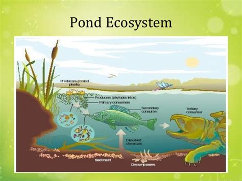 the biology of lakes and ponds biology of habitats series books ecology ecosystems