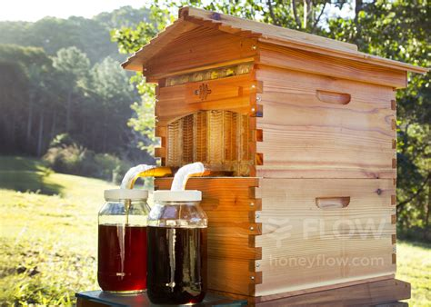 This Author Bought a Flow Hive: What Happened Next Will