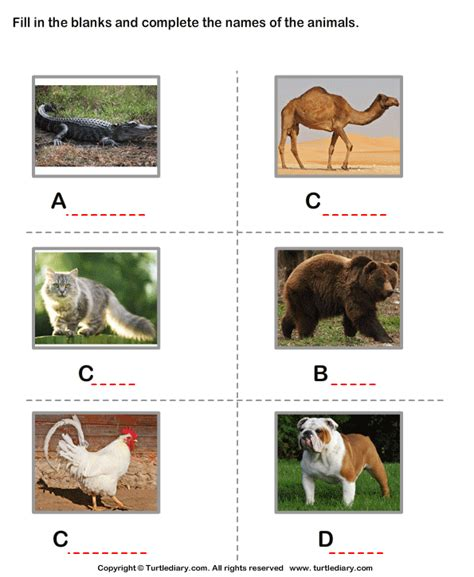 Spellings Baby Farm by Baby Animals Names Worksheets And Science Baby Best