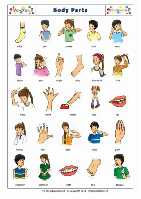 printable body part flashcards for toddlers body parts flashcards for kids vocabulary cards