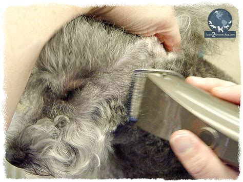 dog grooming clipper burn dog grooming clipper burn noah s ark pet grooming 17