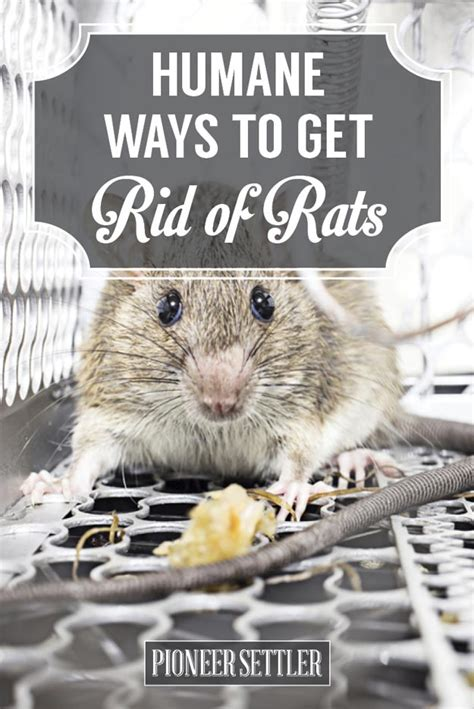 how to get rid of mice in your house humanely