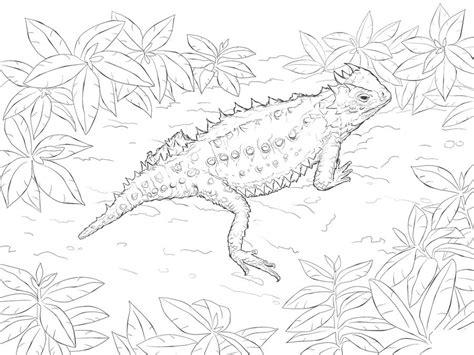 Gila Monster Free Coloring Pages Gila Best Free Coloring Gila Coloring Page