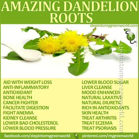 Lower Back Liver Detox by 25 Best Ideas About Dandelion Tea Detox On