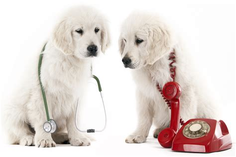 emergency puppy when is it a pet emergency lone tree veterinary center