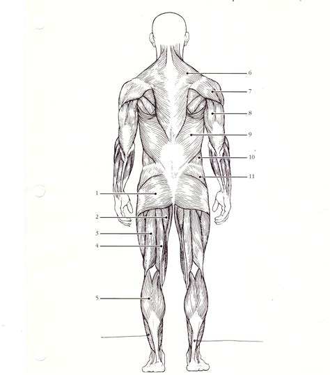 back diagram printable back muscles diagrams diagram site