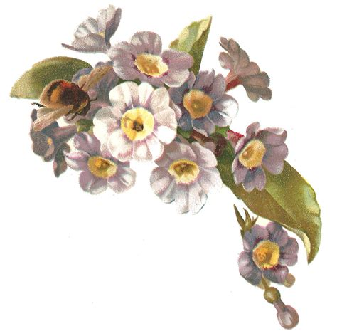 printable victorian flowers antique images free flower clip art antique victorian