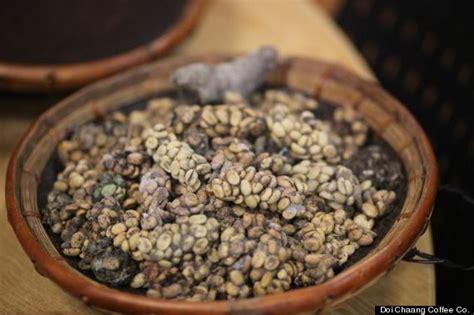 'Cat  Coffee' Taste Test: Civet Digested Beans vs. Starbucks vs. 7 Eleven (VIDEO)   HuffPost