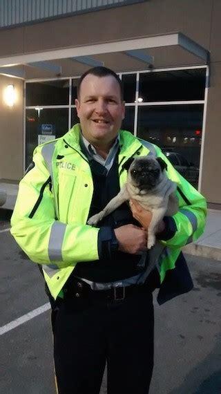 pug rescue vancouver rcmp pug rescue kelowna news castanet net