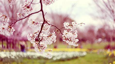 abbeville floral wallpaper pink natural autumn flower pink natural wedding pinterest hd