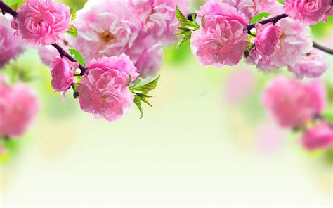 pink flower desktop pink flowers backgrounds wallpaper cave