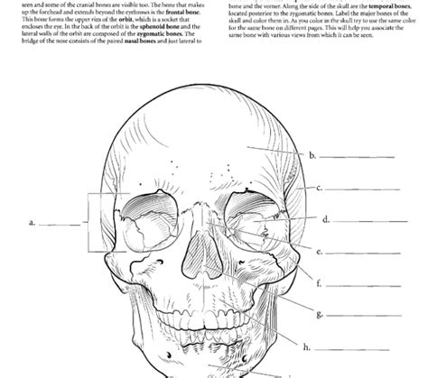 the anatomy coloring book free free anatomy coloring pages coloring pages rmfranklin