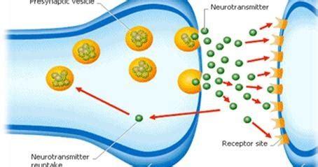 Neurotransmitter Restoration Detox by Rapid Detox Helpline Start A New Chapter Today Ntr A