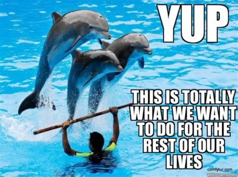 Dolphin Meme - 5 environmentally unfriendly gifts you should never give