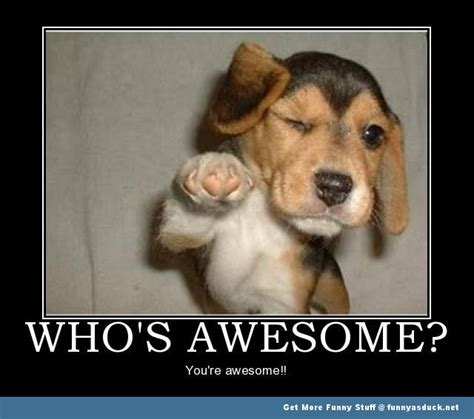 Dog awesome animal meme funny pics pictures pic picture image photo
