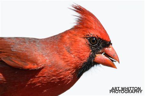Backyard Bird Photography by Get The Backyard Bird Photography