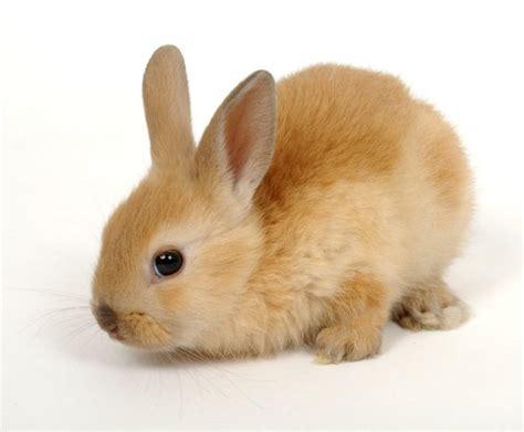 minicuentos de conejos y la comunicaci 243 n no verbal del conejo