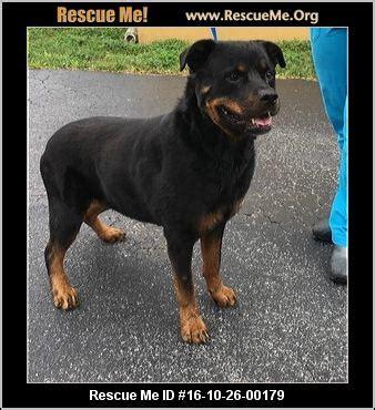 rottweiler rescue idaho florida rottweiler rescue adoptions rescueme org