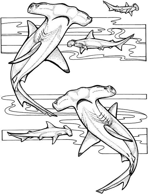 coloring page of a hammerhead shark marine animal coloring pages