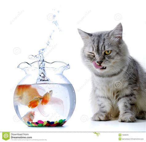 cat and cat and fish royalty free stock images image 1823979
