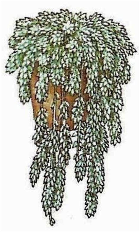 zimmerpflanzen ranken wuchsformen pflanzen plazieren und gruppieren raum