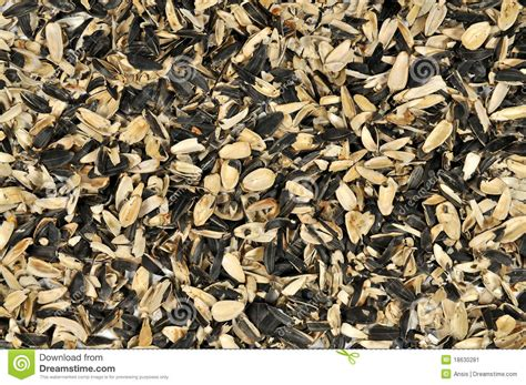 shells of sunflower seeds stock image image 18630281