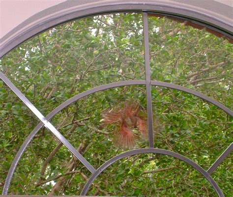 cardinal pecking at window cat tree solar snake