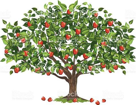how for an apple tree to produce fruit apple tree filled with ripe fruit ready for harvest stock