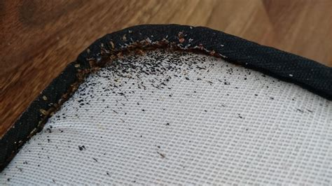 bed bugs removal bed bugs removal parramatta 99 attack pest control sydney