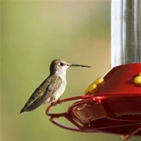 food corner hummingbird food