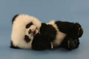 Ming zhu 13 baby panda bear free images