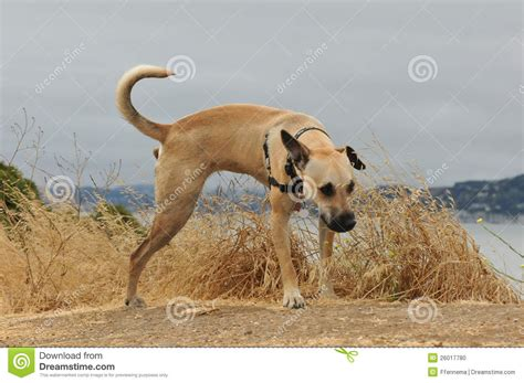 puppy pees all the time puppy on some grass stock photo image 26017780
