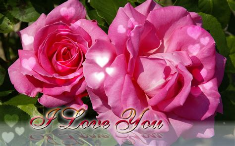 pink roses valentines day s day ecard pink roses