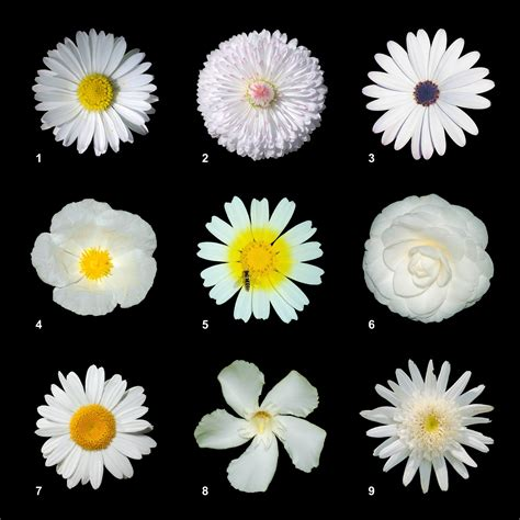 types of white flowers for bouquets