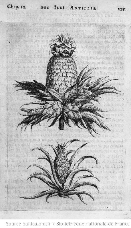 1362847631 histoire naturelle et moralle des 17 best images about pineapples on pinterest pineapple