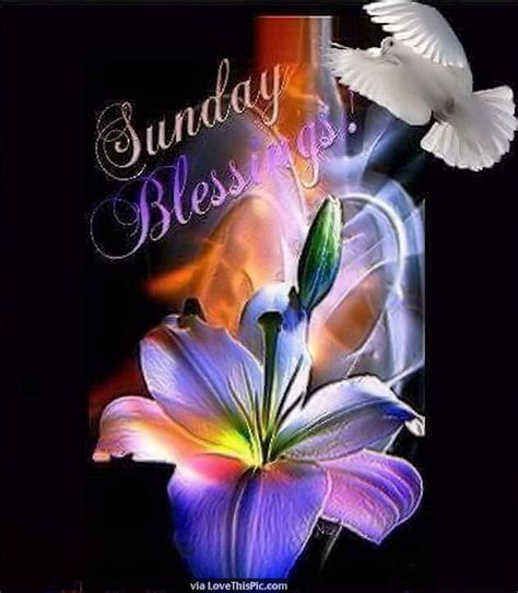beautiful sunday blessings quote pictures   images  facebook tumblr pinterest