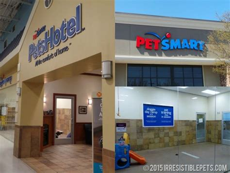 petsmart hotel you re invited national day at petsmart petshotel irresistible pets