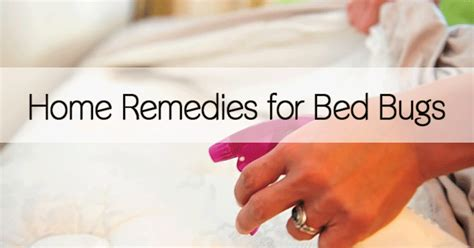 home remedies  bed bugs healthy holistic living