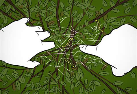 Buchsbaum Raupenbefall by Buchsbaumz 252 Nsler Bek 228 Mpfen Praktische Tipps Obi