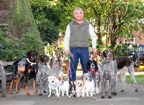 packs and dogs cesar millan photos cesar millan in 143 of 174
