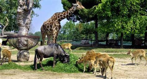 ingresso zoo fasano offerta parco natura viva e zoo safari hotel