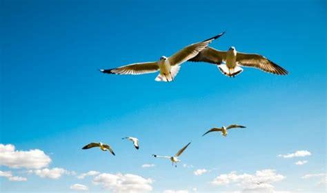 imagenes animales que vuelan como se llaman los animales que vuelan