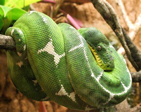 imagenes asombrosas de serpientes algunos animales e insectos para tu pantalla im 225 genes