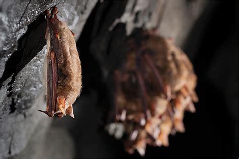 fledermäuse im garten ansiedeln fledermausschutz bei der haussanierung nabu