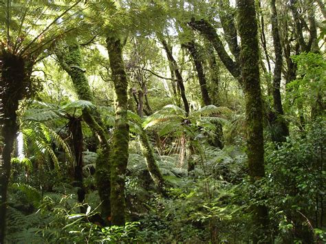 amazon nz file rain forest nz jpg